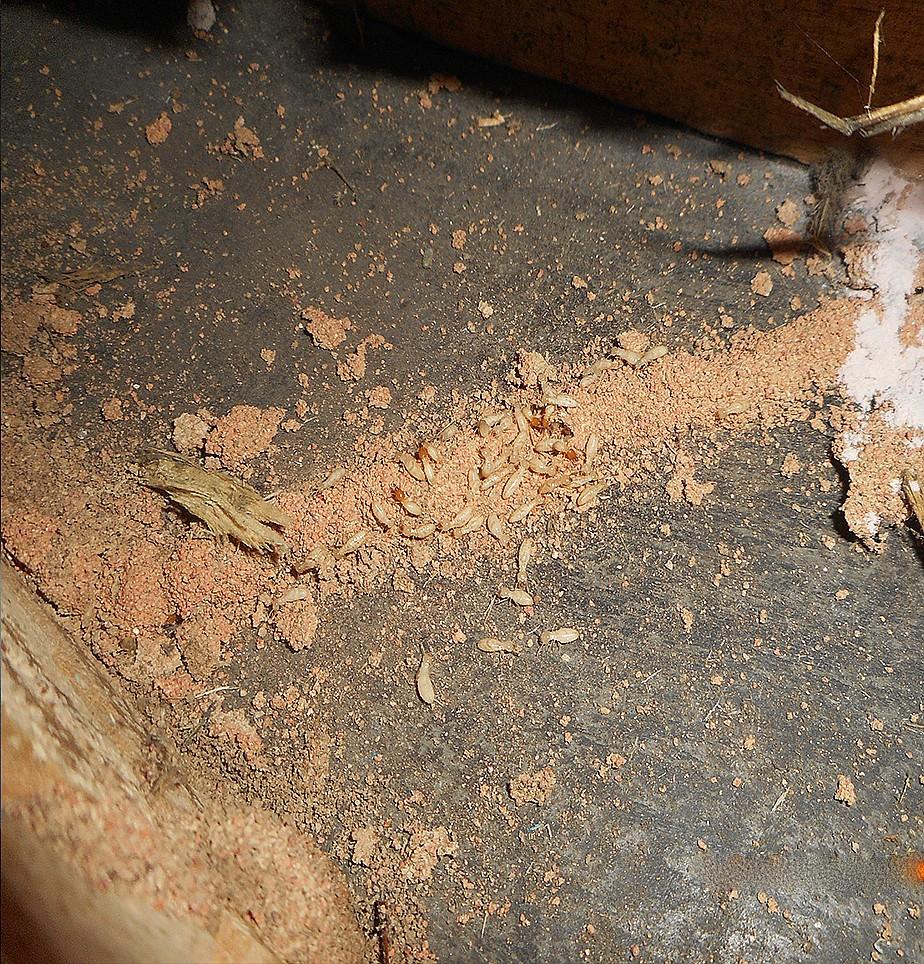 白蚁灭治检查施工