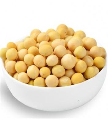 優質大粒黃豆