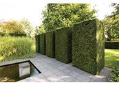 園林設計中的經典元素——樹籬